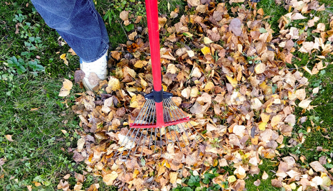 Top Cut Lawn Care Debris and Leaf Removal