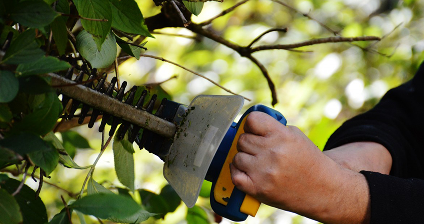 Top Cut Lawn Care Pruning